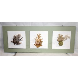Quadri con coralli