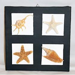 Quadro con conchiglie e stelle marine.